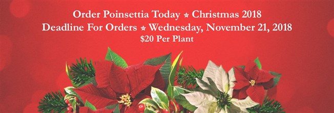 Order your Poinsettia today
